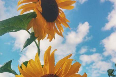 autumn-mott-rodeheaver-gCduzLmwFYM-unsplash.jpg