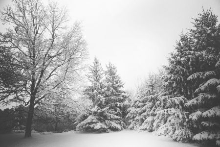 gratisography-snow-trees-winter.jpg